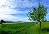 DE - Grafschaft - Birnensortengarten