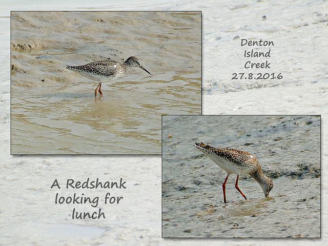 Redshank Newhaven 27 8 2016