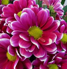 Fleurs de saisons /Season's flowers