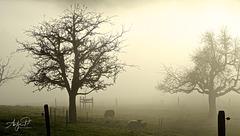 Seltsam, im Nebel zu wandern!