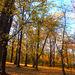 Herbsttag 01