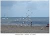 Feeding the gulls Hasting 31 7 2006