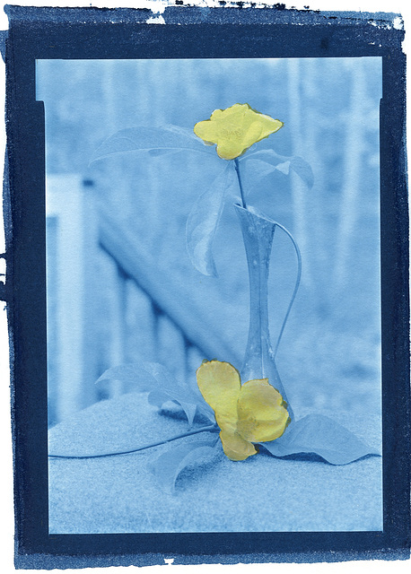 still life with yellow; gum/pigment over cyanotype