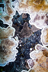 Nature as an Artist: Lichen