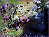 Spanish lavender and mountain stream