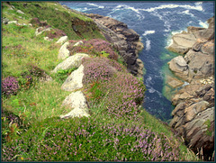 Ancient field wall, heather and granite.