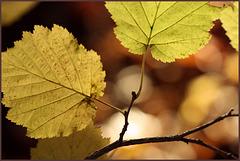 L I C H T   in den  Blättern...