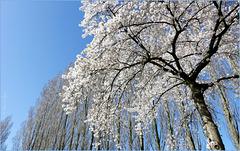Lovely Tree(s)...