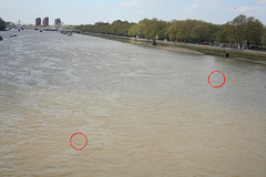 Messages in Bottles No. 86 and 87 floating down the River Thames