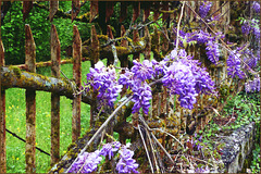 H F F  - Happy Fence Friday