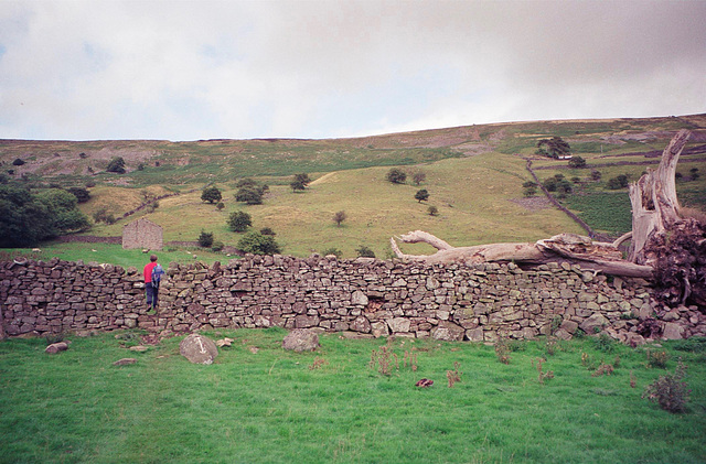 A Squeeze on the footpath near Reeth that circles round up to Fremington Edge. (Aug 1993, scan)