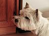 Finn, a friend's dog