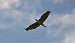 Flight of the Heron