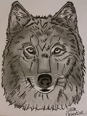 Loup. Wolf