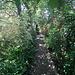 Dappled Back Path leading to greenhouse