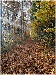 Waldweg im St. Barbara Waldpark [PiP]