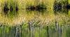 .......die Natur malt sich selber Kunstwerke ins Wasser.....