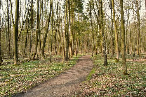 Im Niendorfer Gehege // wald-1200862-co-12-04-15