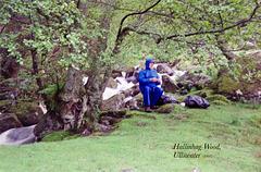 Hallinhag Wood, Ullswater (Scan from May 1993)