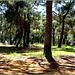 Manavgat : ora visitiamo il parco di Kursunlu Selalesi