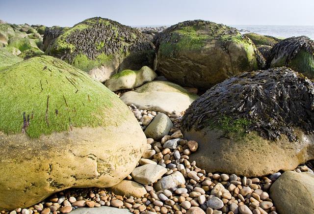 Boulders with seaweed