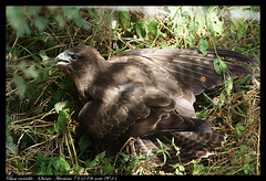 Buse variable DSC01435