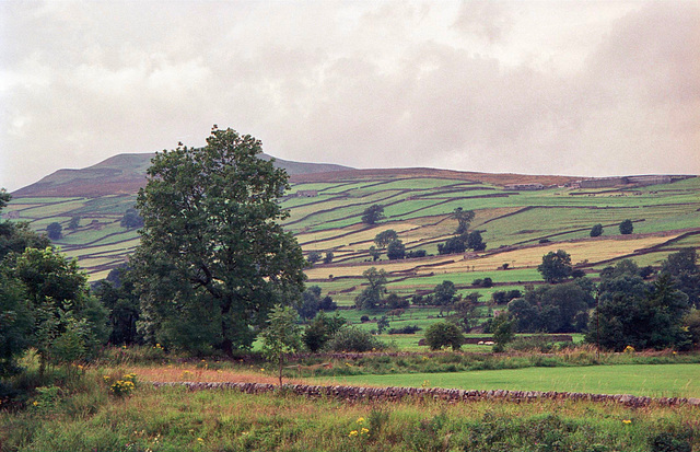 Looking towards Calver Hill (487m) from near Reeth. (Aug 1993, scan)