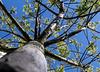 Baum vorm Fenster: Perspektivwechsel