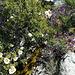 Mountain stream, granite, cistus and Spanish lavender