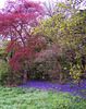 The colours of Spring ~ Neville Wood nr Nocton and Wasps Nest