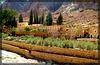 SINAI : fuori dal monastero di Santa Caterina cresce un'ampia struttura agricola grazie alla presenza di un piccolo torrente che produce il miracolo che potete vedere