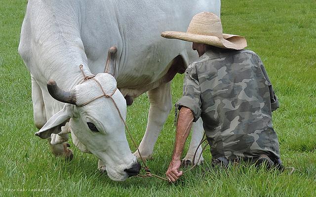 granjero cubano