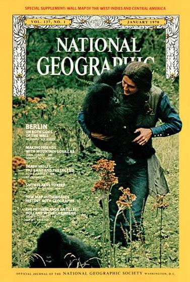Merci beaucoup Dian Fossey!