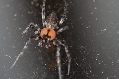SpiderIMG_1485
