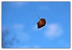 I be leaf I can fly  (◕‿-)