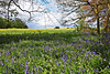Neville Wood Nr Nocton and Wasps Nest ~ Lincolnshire