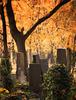 Jüdischer Friedhof Berlin Weißensee. 201811