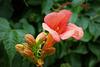 Un fiore per una buona causa