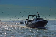 Retour de pêche  /  Fishing return