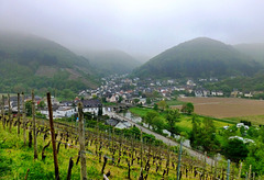 DE - Rech - Misty morning in the vineyards