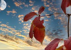 1 (8)..austria autumn leafs..with moon and sky