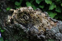 Tête de tortue de plus de 150 ans