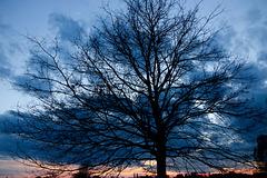Komm lieber Mai und mache die Bäume wieder grün