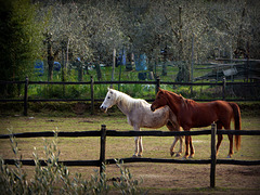 HFF with Horses !