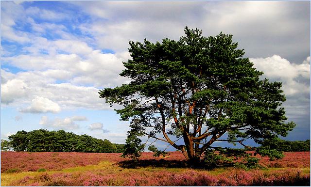 My Evergreen Favorite...