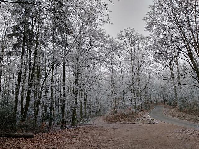 Rehberg, Annweiler am Trifels