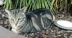 A phlegmatic cat