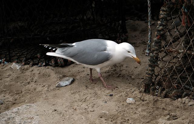 Lyme Regis XPro2 Seafront 5