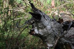En serrant les miches , j'ai évité le regard de ce monstre des bois  .