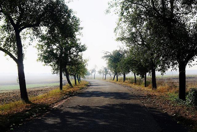 Die ersten Herbstnebel - The first autumn fog - mit PiP
